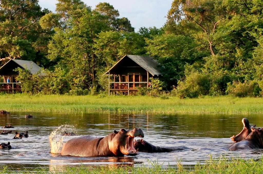 hipopotamos en reserva Moremi con bungalows al fondo
