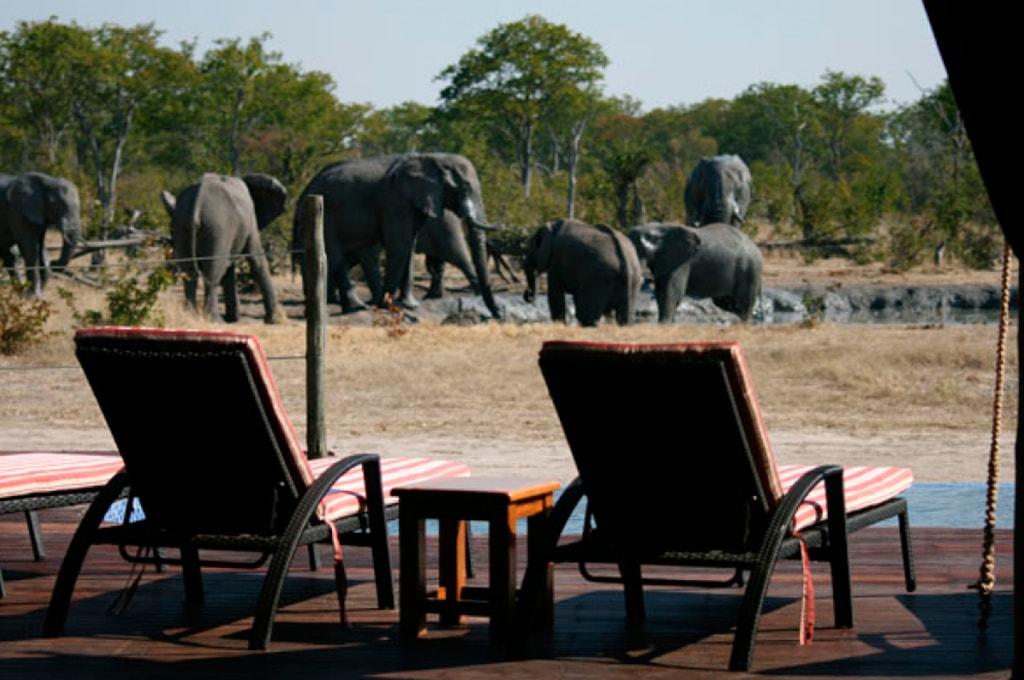 terraza con vistas a elefantes en Camp Kuzuma
