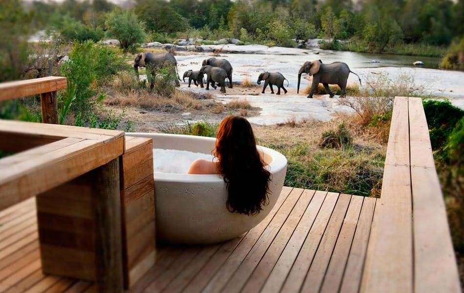 Vista de elefantes desde el hotel en Sudafrica