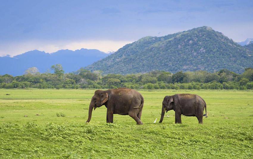 srilanka destino viajes novios