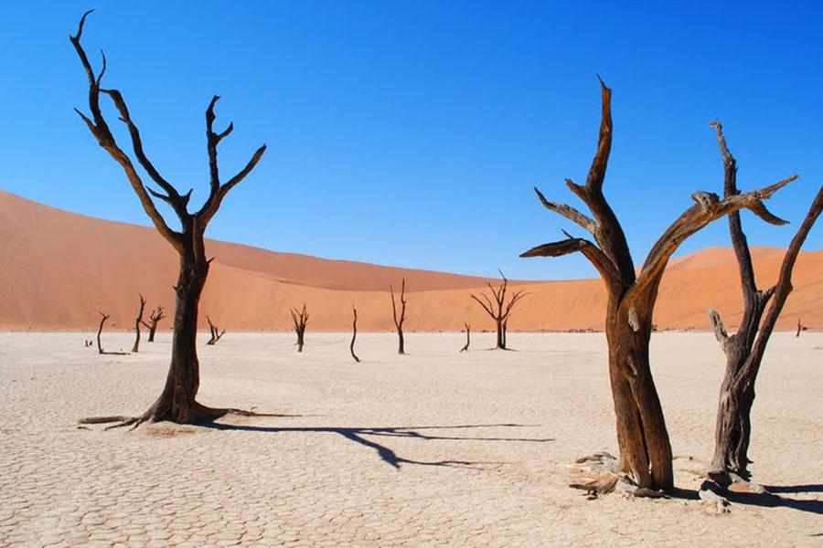 Destino ver naturaleza desierto Namib