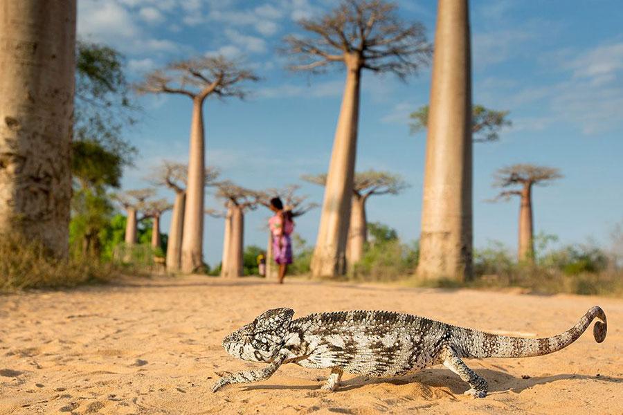 Destino naturaleza Madagascar