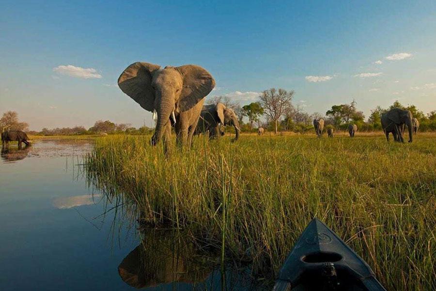 Destino Safari Lujo ver elefantes