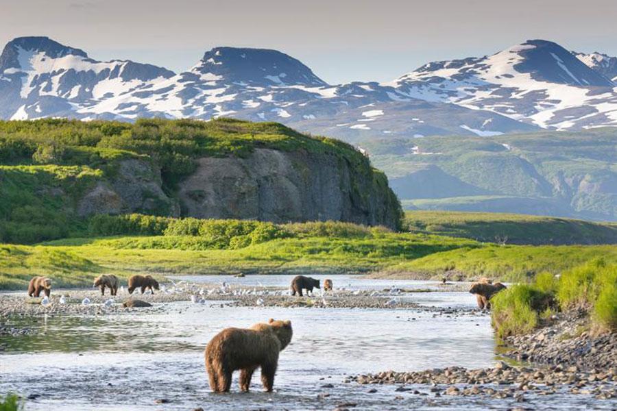 Destino Osos en Alaska
