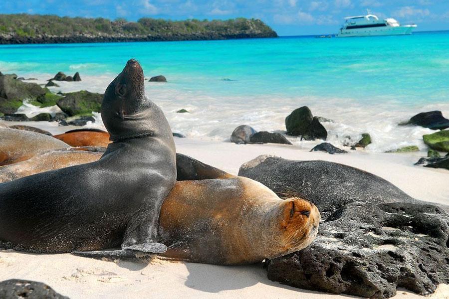Destino naturalez a las Islas Galapagos