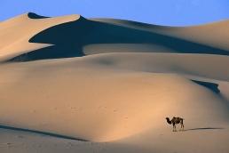 asia desierto gobi