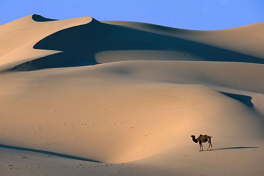 Desierto del Gobi el desierto más grande del mundo