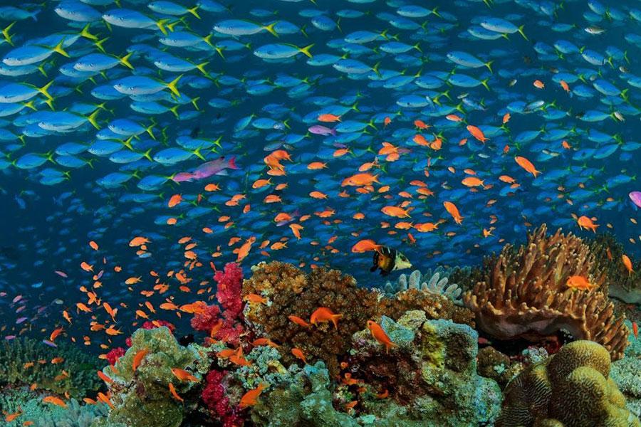 Destino submarinismo de lujo Islas Fiji