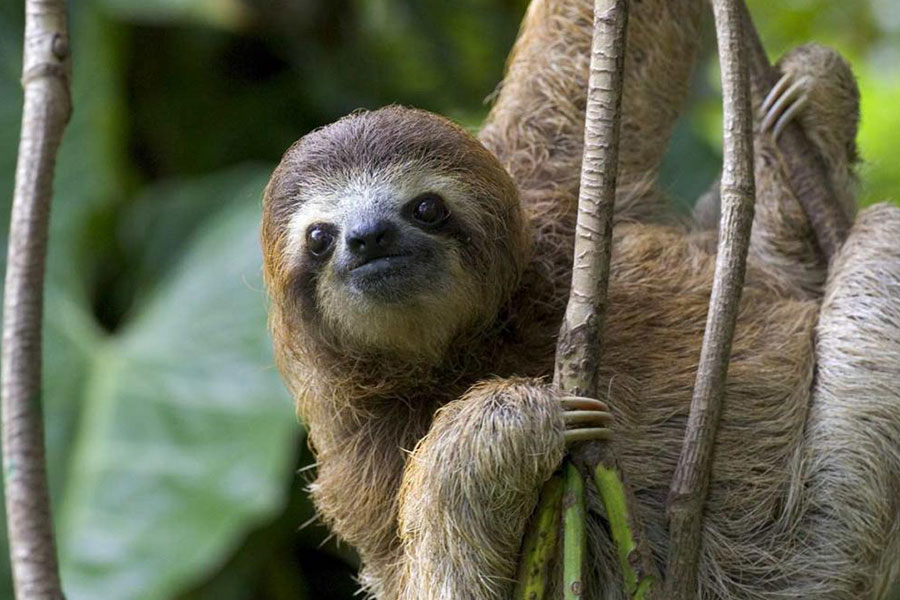 Costa Rica destino paraiso salvaje