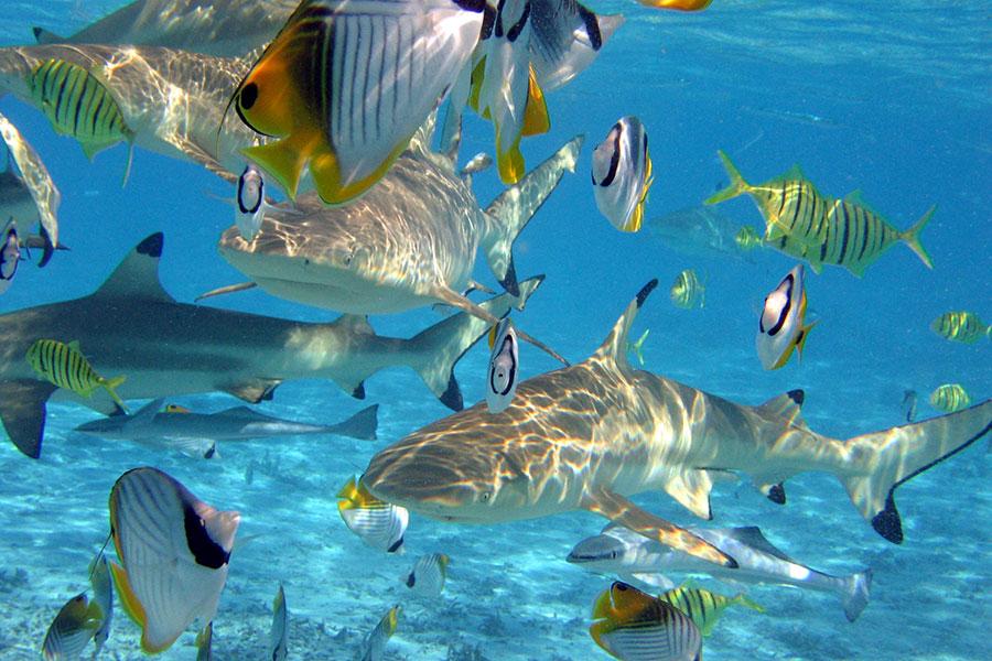 Polinesia destino para submarinismo