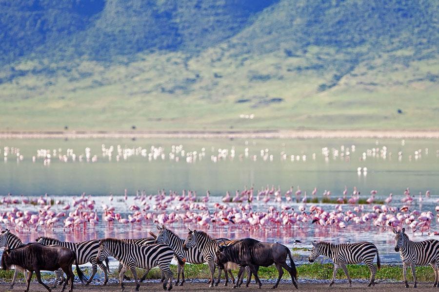 Tanzania destino safari de lujo